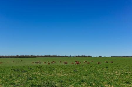 Pampa é o bioma brasileiro que mais perde vegetação natural, alerta estudo